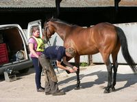 49 Kath Watterson with Midsomer Lady at the farrier