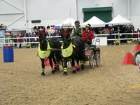 Click for a larger image of Mary King driving round the arena