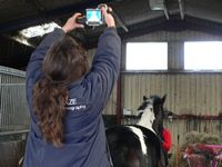 Jackie taking an image of another horse